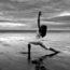 Yoga Summer dates